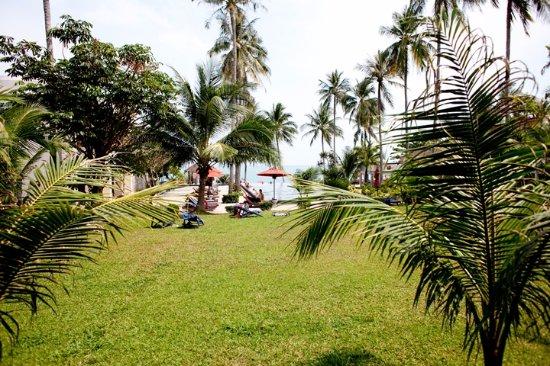 Weekender Resort & Hotel: 마당 1