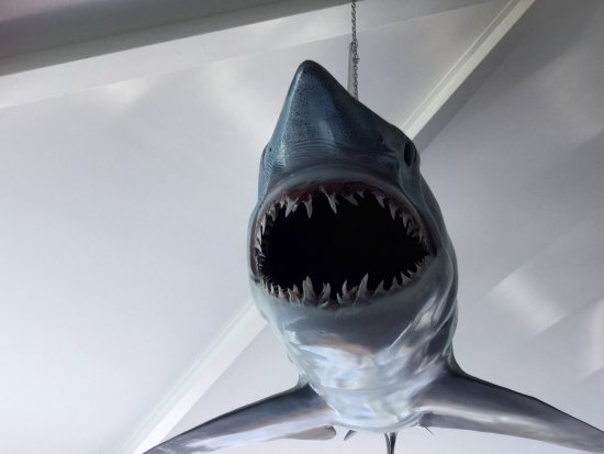 Eden, Australia: A shark hanging from the ceiling😳