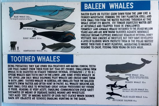 Eden, Australia: Some whale information