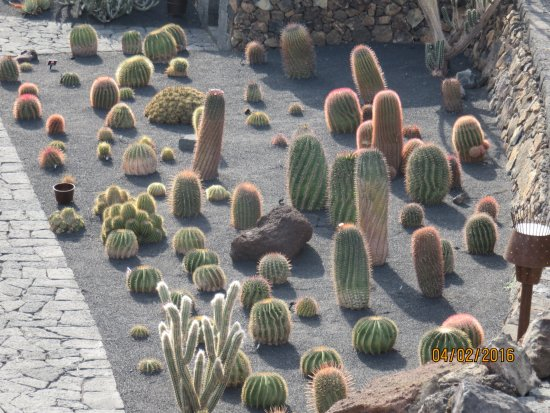 jardin des cactus picture of jardin de cactus guatiza. Black Bedroom Furniture Sets. Home Design Ideas