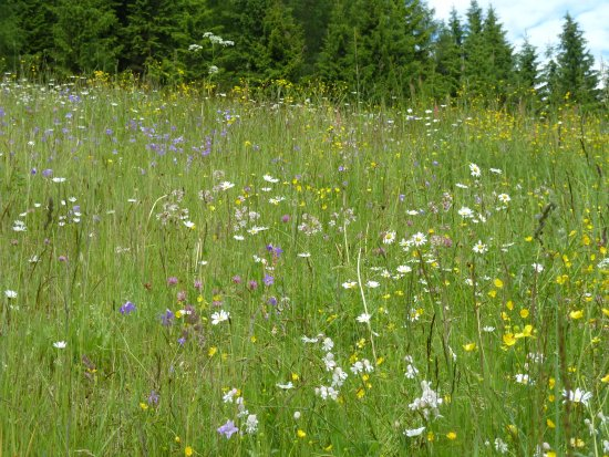 So Sehen Die Wiesen In Hollbruck Aus Picture Of Schone Aussicht