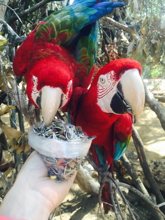 Zoo Castellar: photo1.jpg