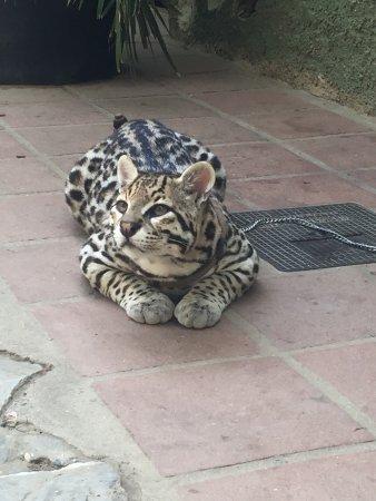 Zoo Castellar: photo2.jpg