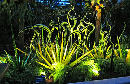 Chihuly in the gardens picture of atlanta botanical garden atlanta tripadvisor for Chihuly atlanta botanical gardens