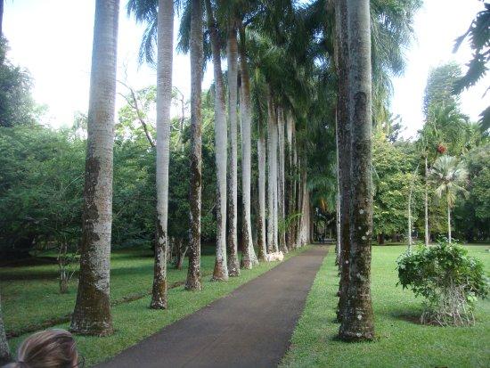 SSR Botanic Garden: allée du parc