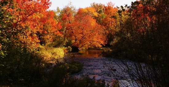Peterborough, NH: The Nubi in the Fall