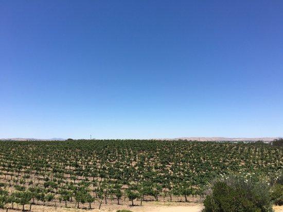 Wine Wrangler - Day Tours: photo8.jpg