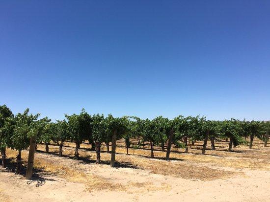 Wine Wrangler - Day Tours: photo9.jpg