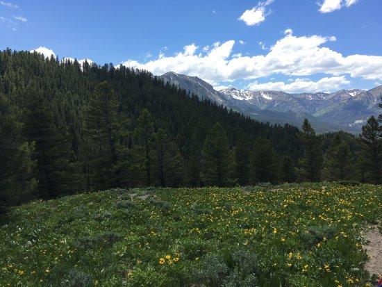 Alpine, WY: photo1.jpg