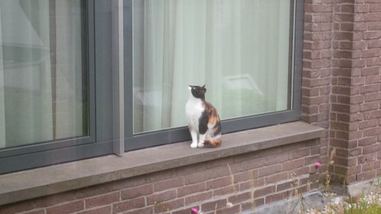 Conscious Hotel Vondelpark: living roof (complete with adorable cats from neighbors ;-)