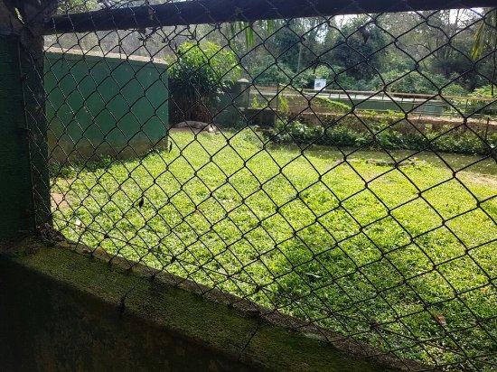 Uganda Wildlife Education Centre: Prison for animals.