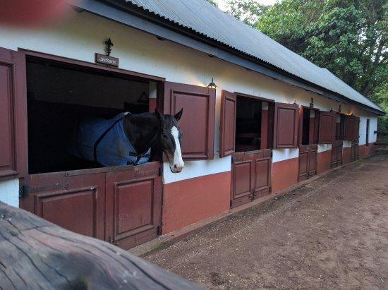 The Manor at Ngorongoro: Stables - optional horse riding