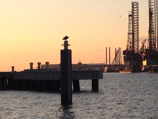Galveston Island, Teksas: Pelican on a pole, Galveston port