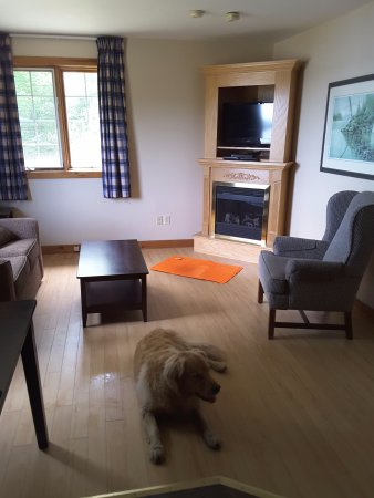 North Kawartha, Kanada: Pet friendly