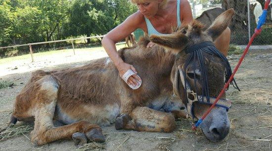 Corfu Donkey Rescue - Изображение Corfu Donkey Rescue ...