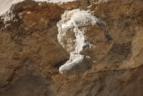 Parowan, UT: A worn away middle toe of one of the hadrosaur prints.