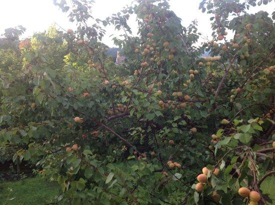 A Casa di Lucia: la nostra frutta