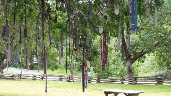 Shady Cove, OR : Ties hanging from the tree