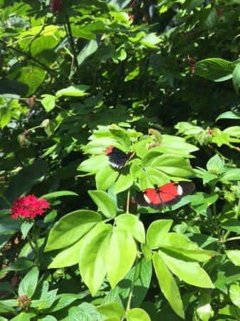 Merveilleux Museum Of Science, Butterfly Garden In Boston, MA.