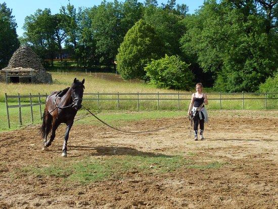 Meyrals, France: Vous aurez le palisir de voir Alexandra et ses chevaux