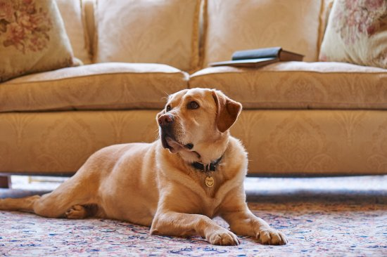 Llandderfel, UK: Dog friendly Hotel