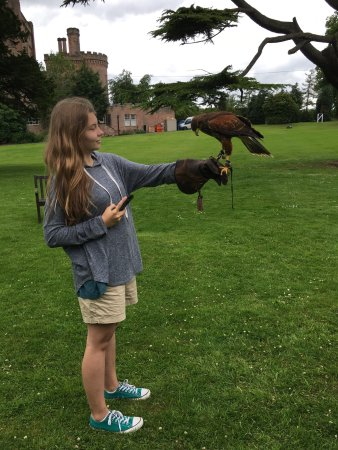 Dalhousie Castle Falconry Highlight Of Our Trip