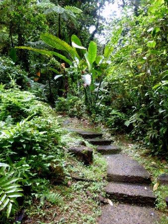 Le Morne-Rouge, Martinique: Le chemin à travers la forêt est bétonné.