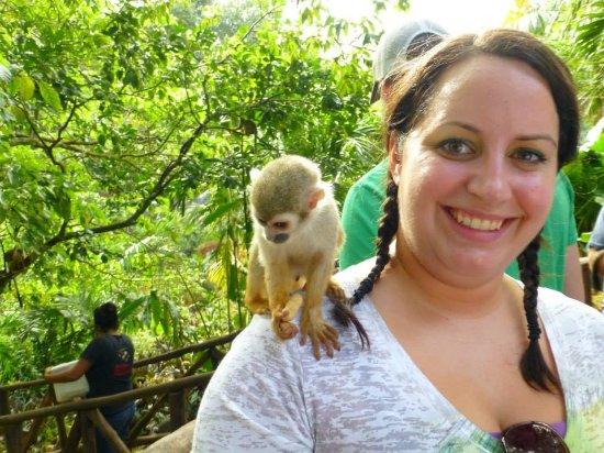 Кабарет, Доминикана: Monkey Jungle