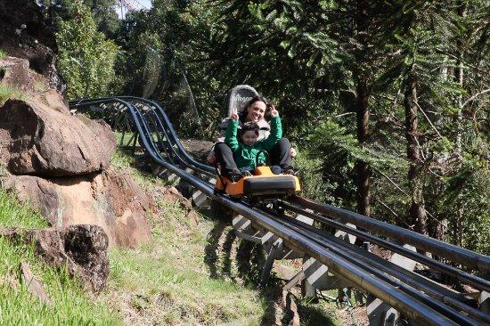 Alpen Park: Alpine Coaster (Trenó alpino)