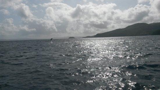 Riviere-Salee, Martinica: Balade avec les dauphins, un moment absolument génial :)