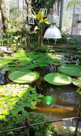 Jardin botanique picture of jardin botanique villa le for Camping le jardin botanique limeray