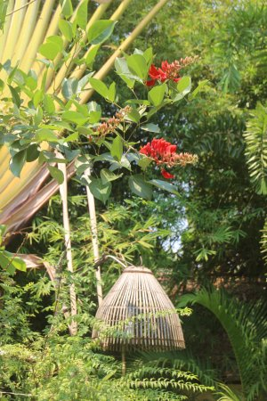 phka villa jardin fleuri - Jardin Fleuri