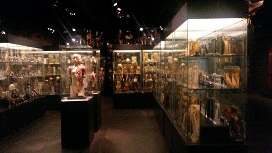 Vrolik Entrance Bild Von Museum Vrolik Amsterdam