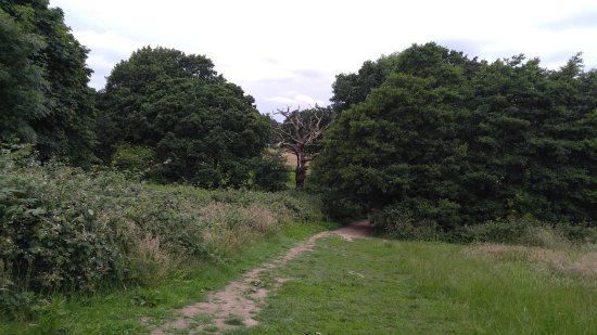 Hampstead Heath: One of the things interesting about the Heath is that they don't cut down the dead trees.