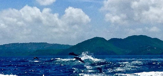 Cap Estate, St. Lucia: Whale Watching Trip