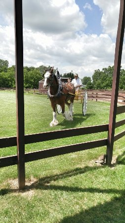 Larson's Famous Clydesdales: 20160630_134307-01_large.jpg