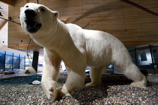 Longyearbyen, Norwegia: Opgezette ijsbeer