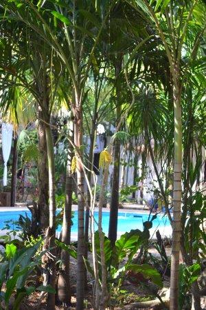 Green Tulum Cabanas & Gardens Photo