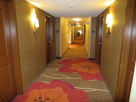 Hallway floor 4 Picture of Hilton Garden Inn Boston Logan