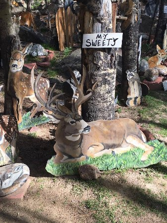 Lake City, CO: Sweety's animals