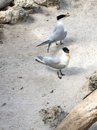Florida Keys Wild Bird Rehabilitation Center: photo0.jpg