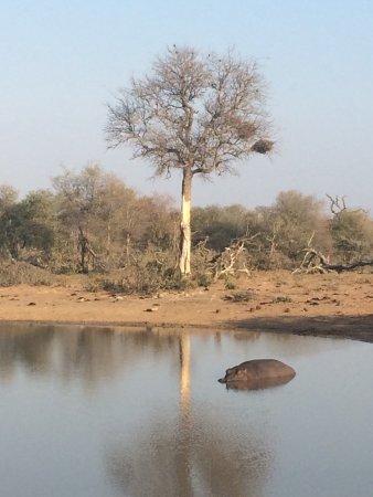 Kambaku Safari Lodge: photo4.jpg