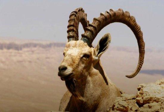 Mitspe Ramon, Israel: В пустыне тоже есть жизнь !