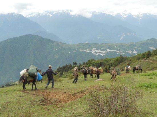 Lanping County, China: Horse team, trekking Biluo snow mountain.