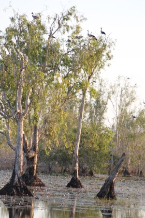 Mary River National Park, Australia: Rockhole billabong cruise offered by Lodge
