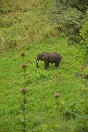 Pumba Safari Cottages: Elephant just below the cottages