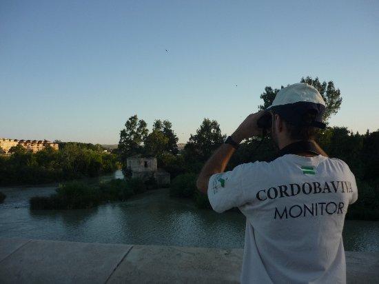 Cordobaviva