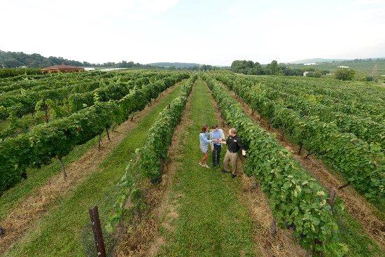 Gettysburg, PA: Adams County Winery