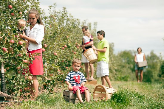 Gettysburg, PA: Apple picking at Hollabaugh Bros