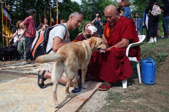 Pomaia, Italien: Benedizione degli Animali all'Istituto Lama Tzong Khapa a due passi